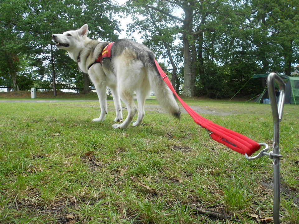 Freya dog camping ground stake