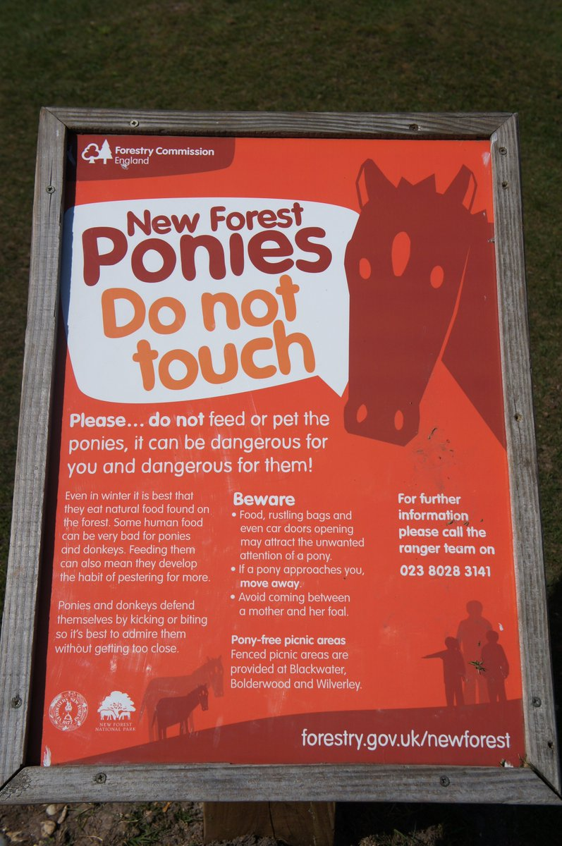 do not touch new forest ponies